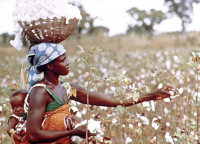 640_464_cotton-farmer